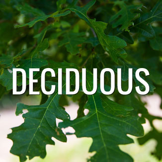 Deciduous-Featured-Image